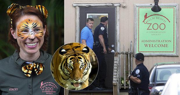 Tygr v zoo roztrhal chovatelku: Nepřežila převoz do nemocnice