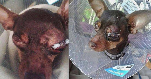 Filuta má velké bolesti: Děti polily psíka savem a zbily ho klackem