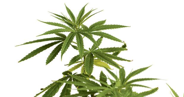 Žena (35) zapila antibiotika marihuanovým odvarem, její táta (62) za to dostal pokutu
