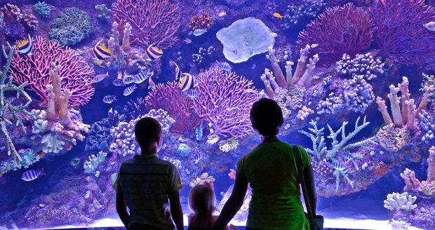 Turecko: Akvárium v Antalyi