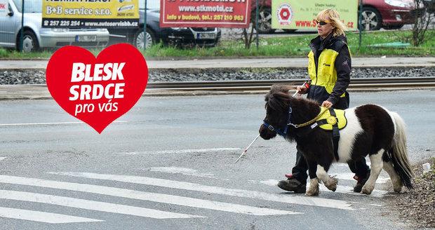 Organizace Helppes vycvičila vodicího koně jménem Katrijn. A umí neuvěřitelné věci...