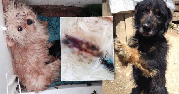Na záchranu mají jen pár dní: Z romských osad musí odvézt desítky ztýraných psů