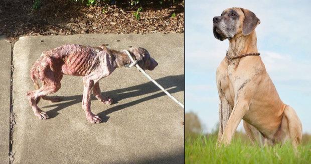 Otřesný případ týrání zvířat: Ze statného psa zbyla troska. Fenku museli utratit