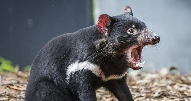 tasmánské seznamovací služby speed dating rohový dům windsor