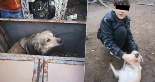 Šokující zprávy ze Slovenska: Romové prodávali psy na maso Vietnamcům.