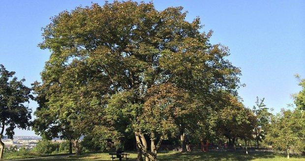 Revitalizaci parku Dlážděnka ovlivní místní obyvatelé.