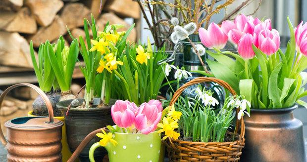 Jarní cibuloviny svými výrazně zbarvenými květy rozzáří každou zahradu.