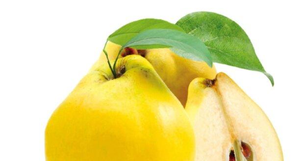 Plody kdouloně