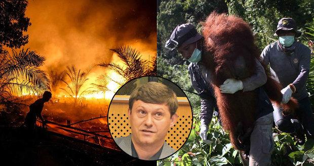 České svědectví: Kvůli palmovému oleji rozsekali opice mačetami