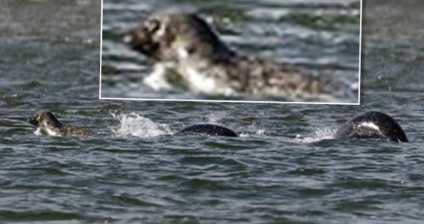 Lochnesská příšera nalezena?! Amatérský fotograf vyfotil podivné zvíře rochnící se v jezeře!