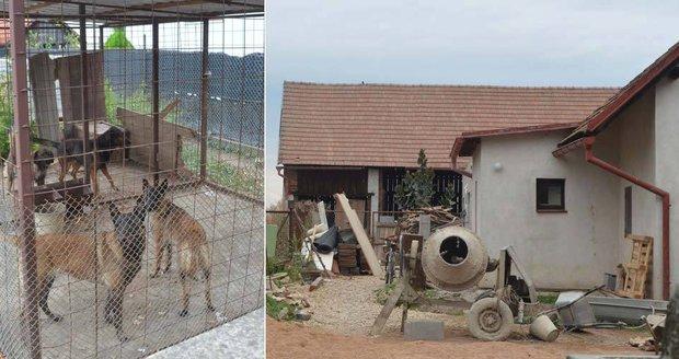 Chlapce (†5) roztrhala smečka problémových psů: Pokousali i sousedku majitele