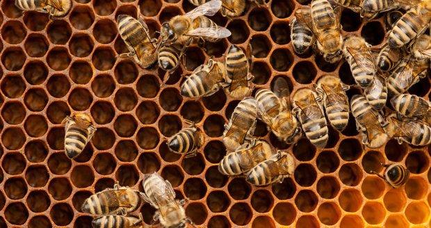 Na Opavsku budou bez medu: Někdo tam ničí úly a krade včelařské vybavení. (Ilustrační foto)