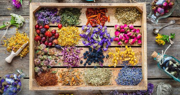 I na podzim můžete najíst v přírodě spoustu léčivých rostlin