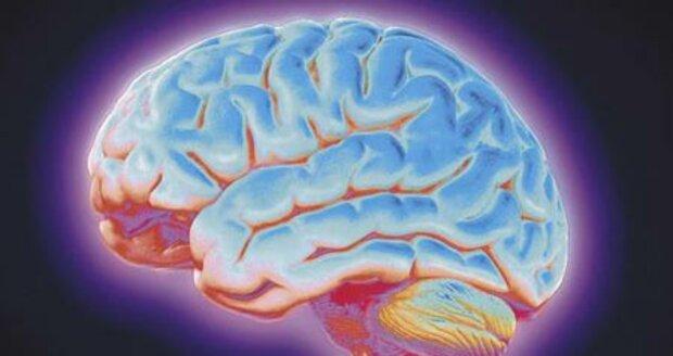 Ilustrační foto - mozek
