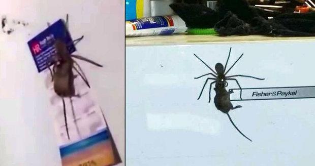 Děsivý souboj v kuchyni u lednice. Obří pavouk přemohl velkou myš