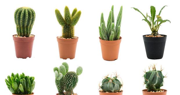 Jak na přezimování kaktusů?