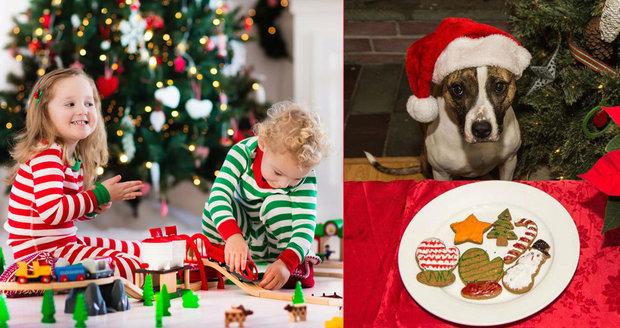 Děti si často k Vánocům přeji zvířátko. Na kolik vás vyjde takový pejsek  24579aaff5