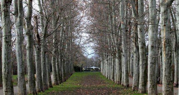 Na severu Kolovrat vyroste nová stromová alej. (ilustrační foto)