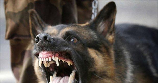 Dítě (3) na Ostravsku napadl pes: Vážně ho pokousal
