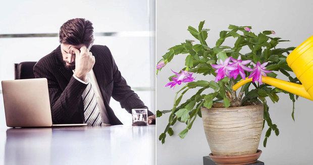 Stres a únava v práci? Zdraví vám zachrání pokojové rostliny!
