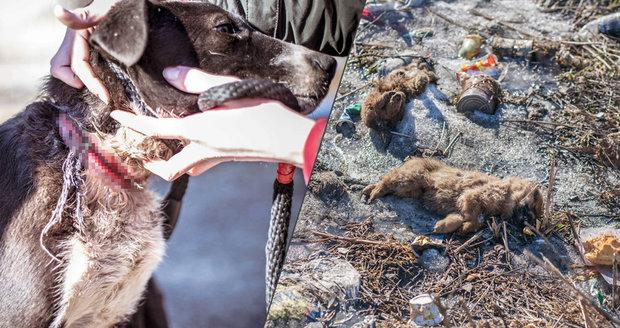Psí zkáza v romských osadách: Děti hází štěňata o zem, topí je, některá i oběsí