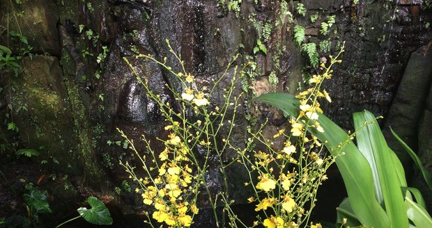 Orchideje ve skleníku Fata Morgana hrají všemi barvami.