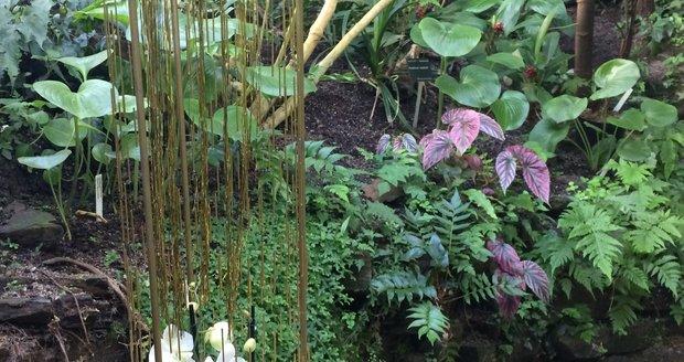 Botanická zahrada v Praze zahájila výstavu orchidejí ve skleníku Fata Morgana.