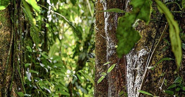 Helena Houdová skupuje stromy na Sumatře.