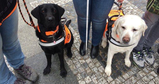 """""""Občas potřebuji pomoc cizích,"""" říká nevidomá Blanka: Vodicí pes nezvládne vše"""