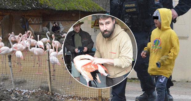 Brutální útok malých dětí (5, 6 a 8) na zvířata v Jihlavě: Ubitý plameňák zachraňoval pražskou zoo!