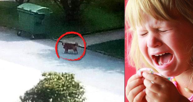 Dolním Žandovem běhá neočkovaný pes a napadá lidi! Pokousal čtyřleté dítě d552a84288