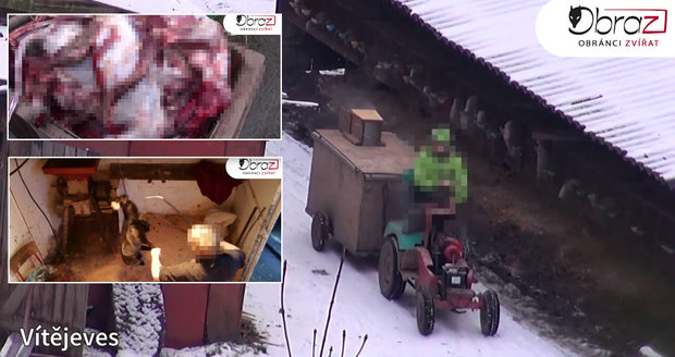 Drastické záběry: Ochranáři zvířat politikům ukázali, jak se zabíjí kožešinová zvířata
