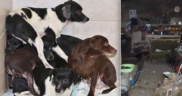 16 psů žilo v temné kobce plné odpadků v Novém Bydžově: Bojí se lidí i světla