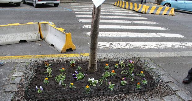 Spolek Street Gardening společně s místními občany vytváří krásné malé zahrádky uprostřed ulic. Tato vznikla ve středu v Kubelíkově ulici na Žižkově.