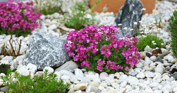 Po vysazení zasypte okolí rostlin kamennou drtí. Ochráníte tak listy před stykem s mokrou půdou, ale například i před slimáky a zabráníte prosrůstání plevele.