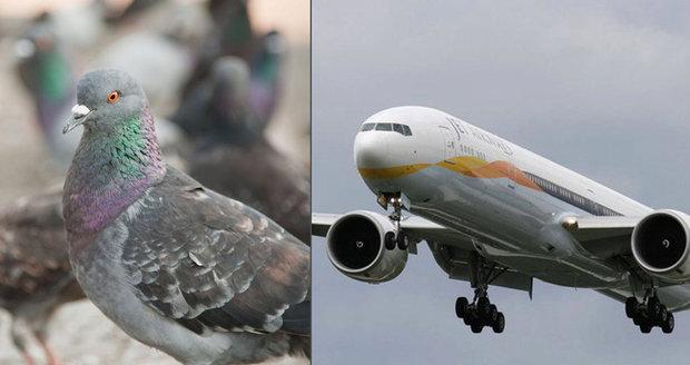 Srazilo letadlo ptáka? Peníze za čekání dostat nemusíte, rozhodla EU