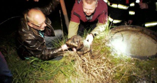 Fenka Ajka uvázla v kanalizační šachtě. Celá ulice ji zachraňovala 4 hodiny