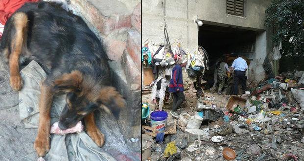 Špína a vzteklina: Podnikavci vozí toulavé psy z ciziny, pak žebrají o peníze