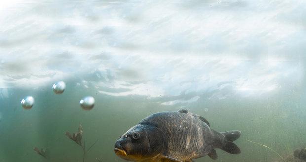 jen rybaření seznamovací služba rand mcnally zeměkoule