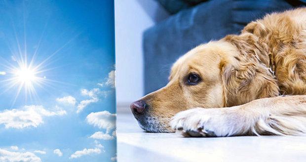 Pozor! Psi snášejí vedro hůře než lidé.