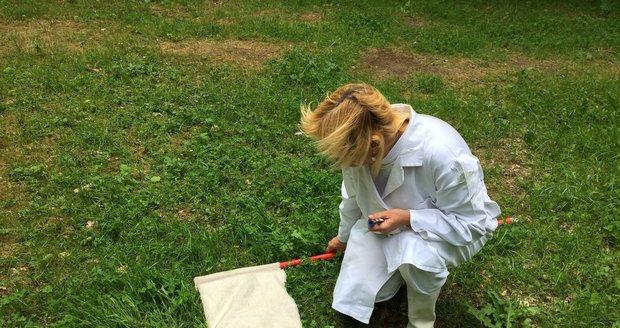 Pražští hygienici v terénu vlajkují klíšťata, jarní fáze jde do finále.