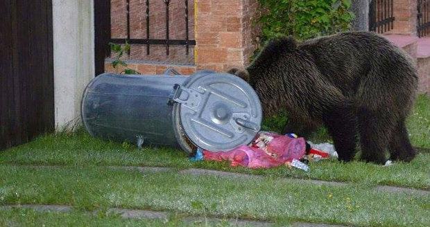 Zastřelení medvědí mámy na Slovensku byla chyba. Úřad: Ať se to neopakuje
