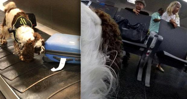 Pes na letišti v akci  Takto vám prozkoumá zavazadla 34f09be239
