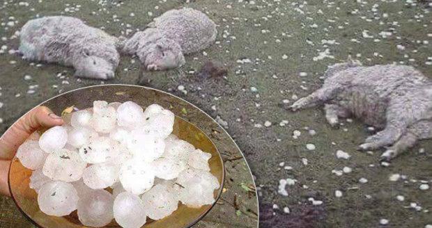 Pobité ovce a zničená auta. Ve Španělsku zabíjela bouřka s obřími kroupami