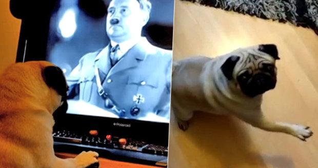 Muž naučil psa nacistický pozdrav a video zveřejnil na internetu: Teď čelí policejnímu stíhání