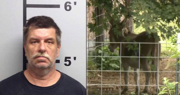 Muž je obviněn ze sodomie a týrání zvířat: Kamera zachytila, jak znásilnil oslici!