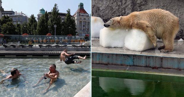 Lucifer řádí nad Evropou: Horko zabíjí, medvědy v zoo chladí obří kostky ledu