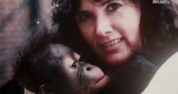 Zemřela televizní hvězda. Chantek uměl znakovou řeč i stolovat v restauraci