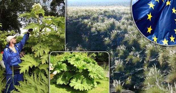 Za plevel pokuta až 30 tisíc. Brusel nařizuje likvidaci nepůvodních rostlin