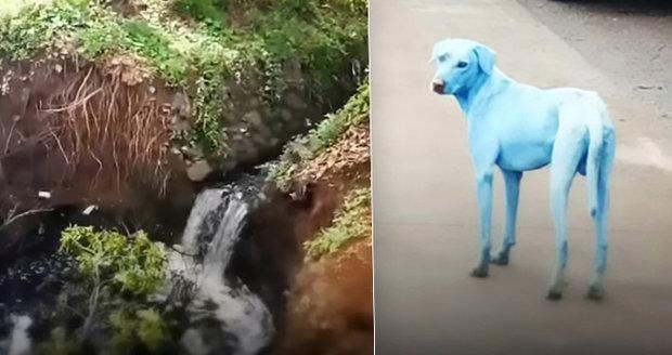 """Psi po koupání v řece zmodrali. """"Šmoulí"""" srst mají kvůli jedům z chemičky"""